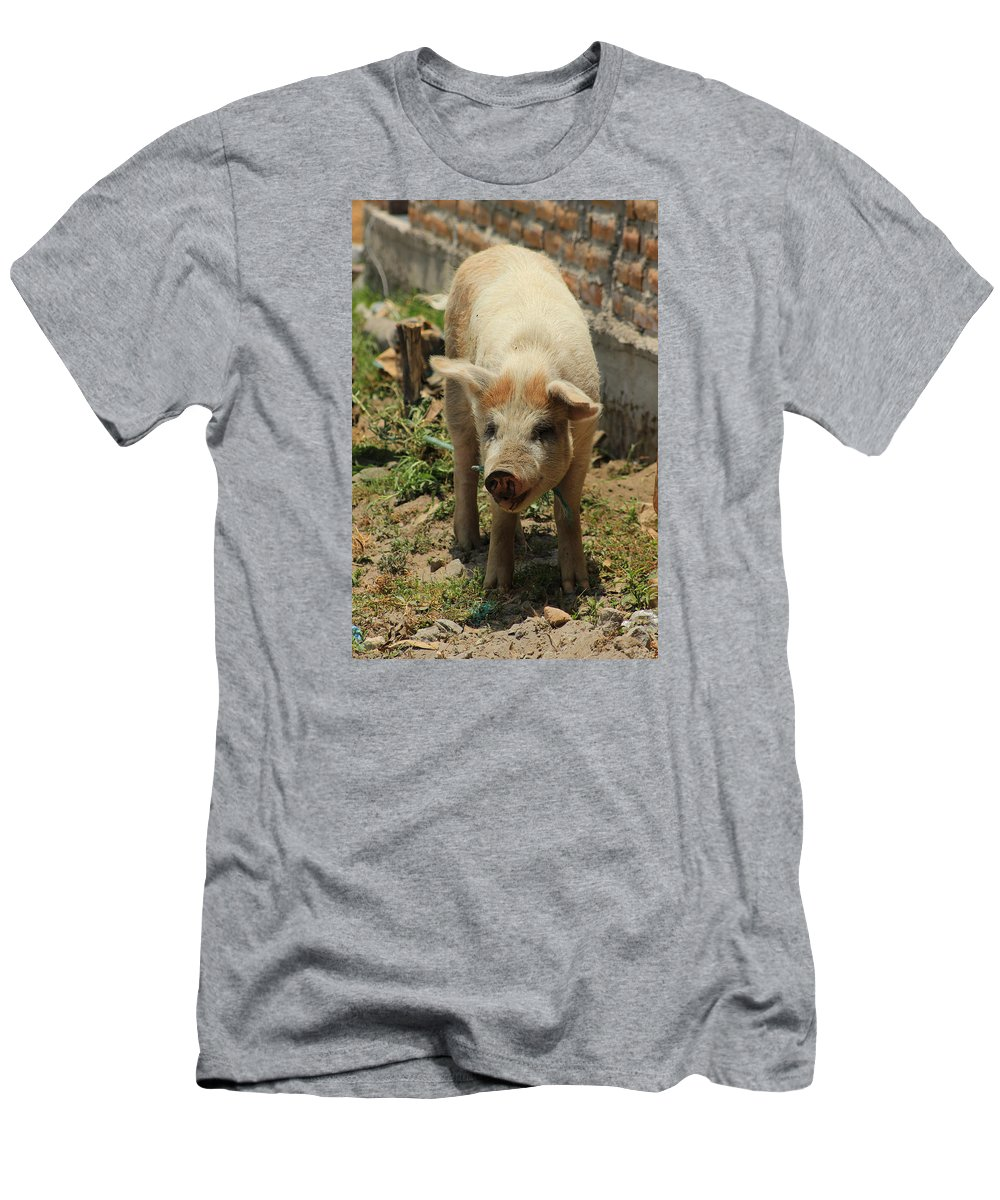 Pig Men's T-Shirt (Athletic Fit) featuring the photograph Pig On A Farm by Robert Hamm