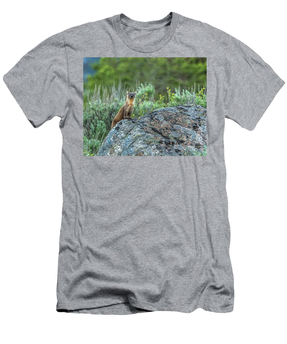 Pine Marten Men's T-Shirt (Athletic Fit) featuring the photograph Pine Marten With Attitude by Yeates Photography