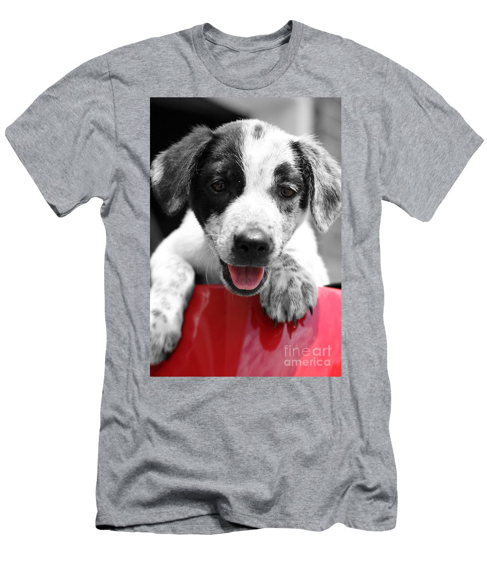 Puppy Men's T-Shirt (Athletic Fit) featuring the photograph Playing by Amanda Barcon