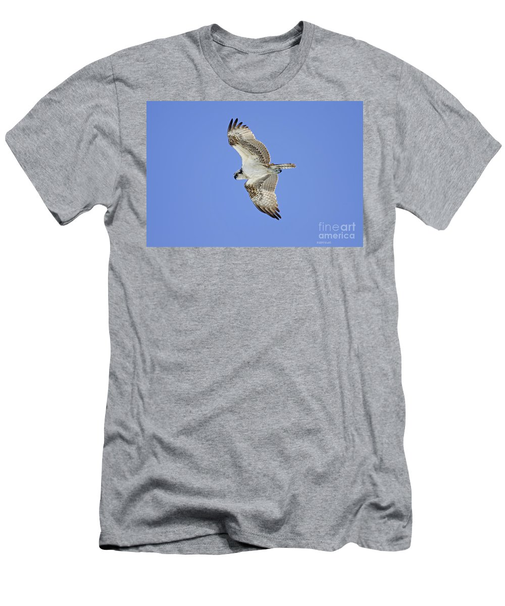 Men's T-Shirt (Athletic Fit) featuring the photograph Ponce Osprey 1 by Deborah Benoit