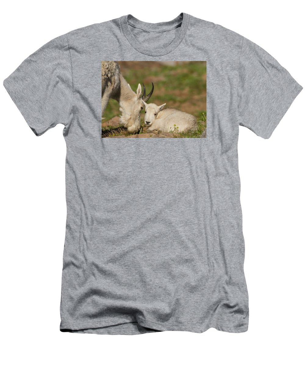 Mountain Goat Men's T-Shirt (Athletic Fit) featuring the photograph Precious Kid by Kent Keller