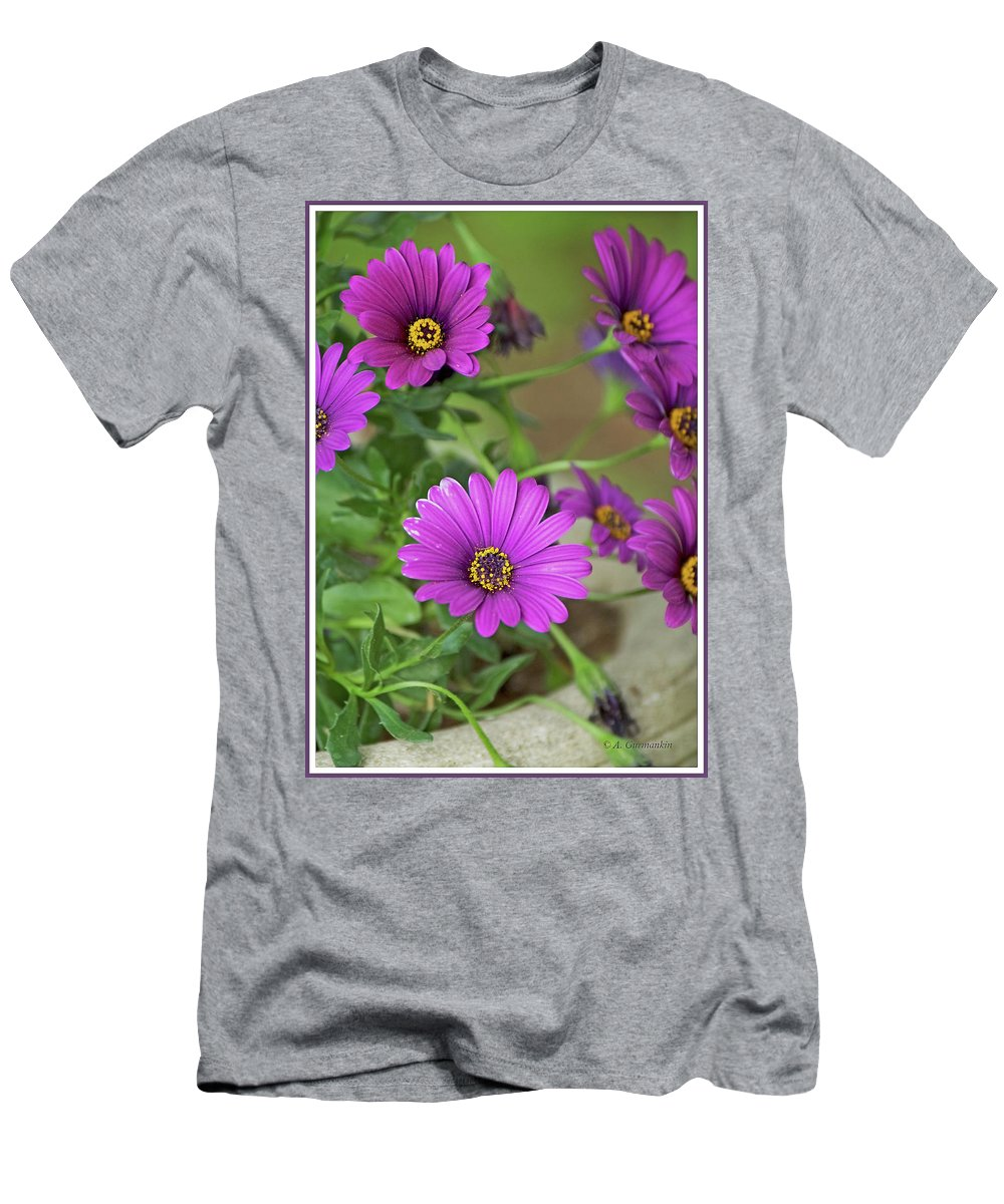 Aster Men's T-Shirt (Athletic Fit) featuring the photograph Purple Aster Flowers by A Gurmankin