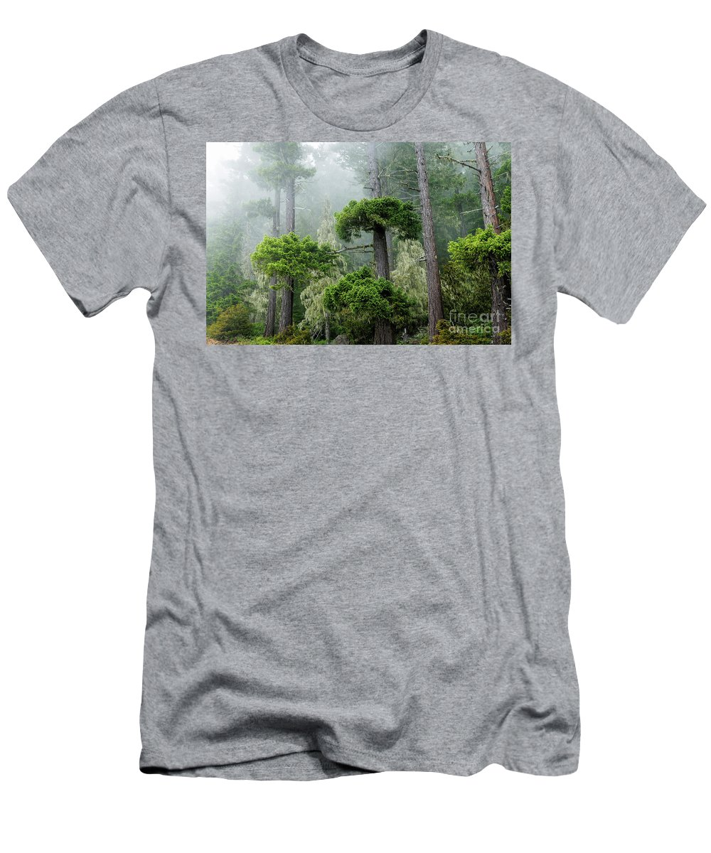 Olympic National Park Men's T-Shirt (Athletic Fit) featuring the photograph Rainforest by Michael Wheatley