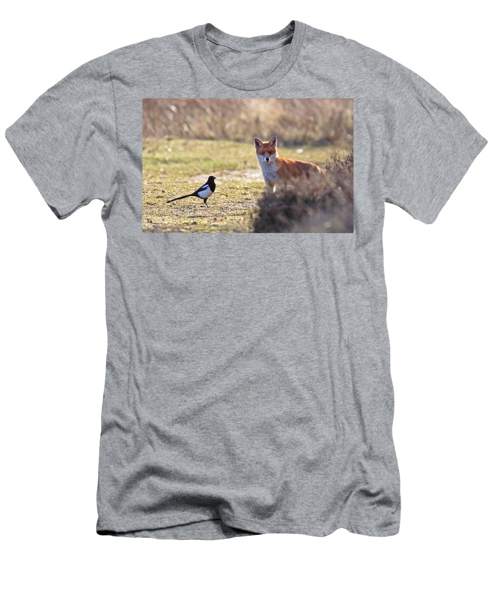 Magpie Men's T-Shirt (Athletic Fit) featuring the photograph Red Fox And Magpie by Bob Kemp