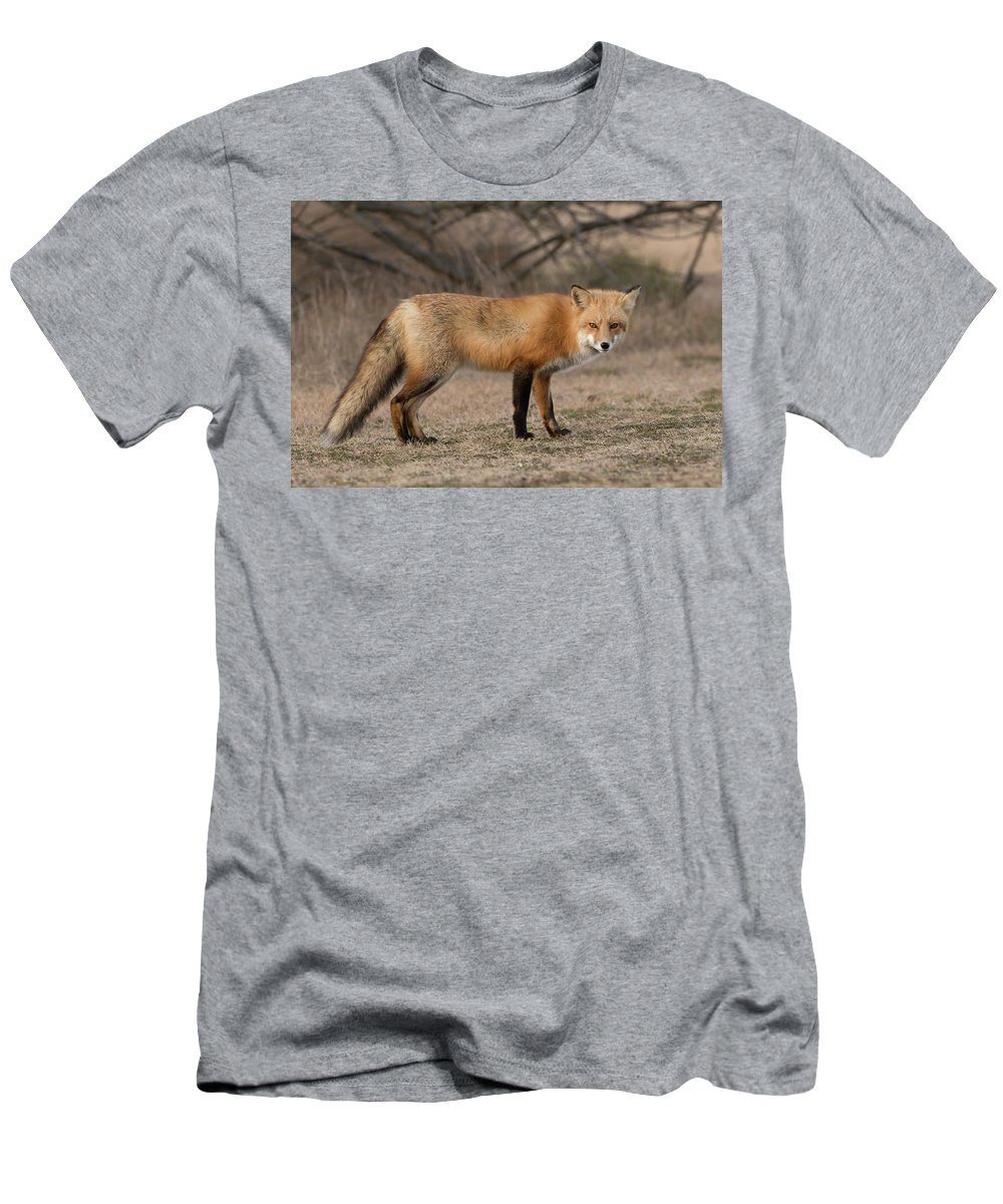 Red Fox Men's T-Shirt (Athletic Fit) featuring the photograph Red Fox by George DeCamp