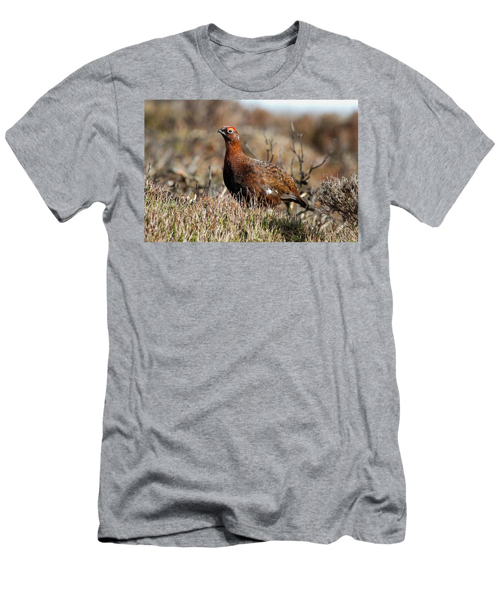Red Grouse Men's T-Shirt (Athletic Fit) featuring the photograph Red Grouse by Bob Kemp