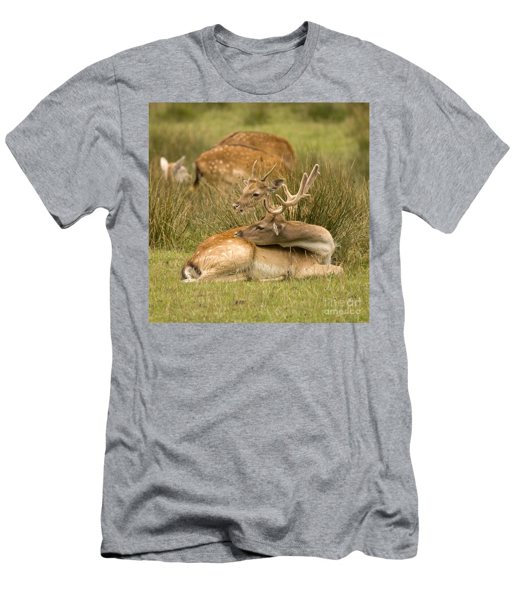 Fallow Deer Men's T-Shirt (Athletic Fit) featuring the photograph Rest Time by Angel Ciesniarska