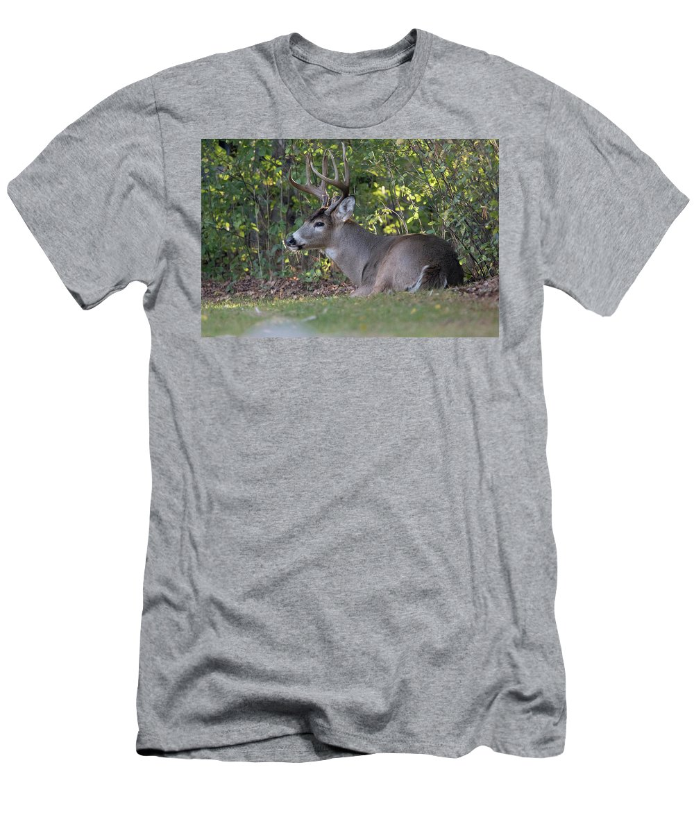 Rest Men's T-Shirt (Athletic Fit) featuring the photograph Resting Buck by Robert Huebner