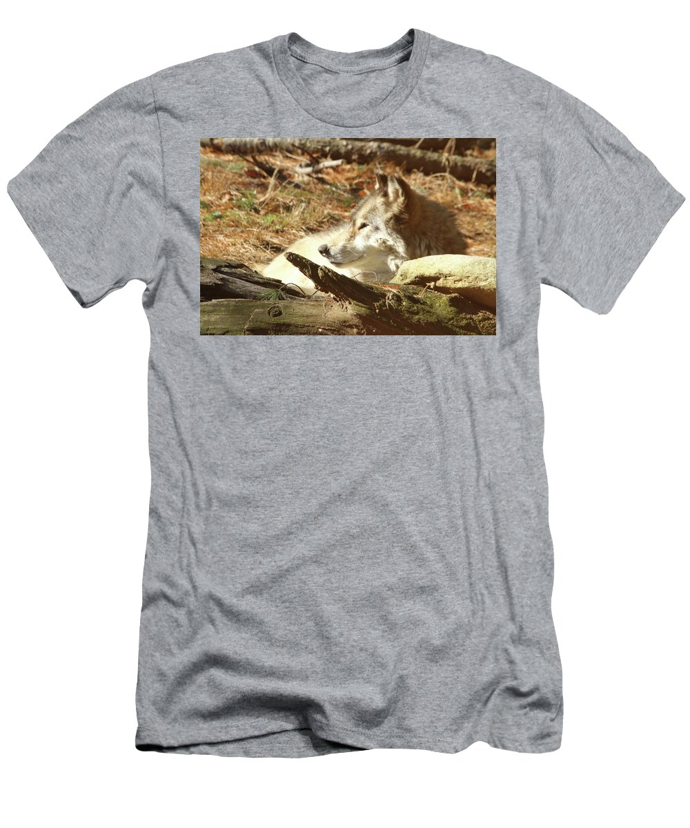 Wolf Men's T-Shirt (Athletic Fit) featuring the photograph Resting Wolf by Karol Livote
