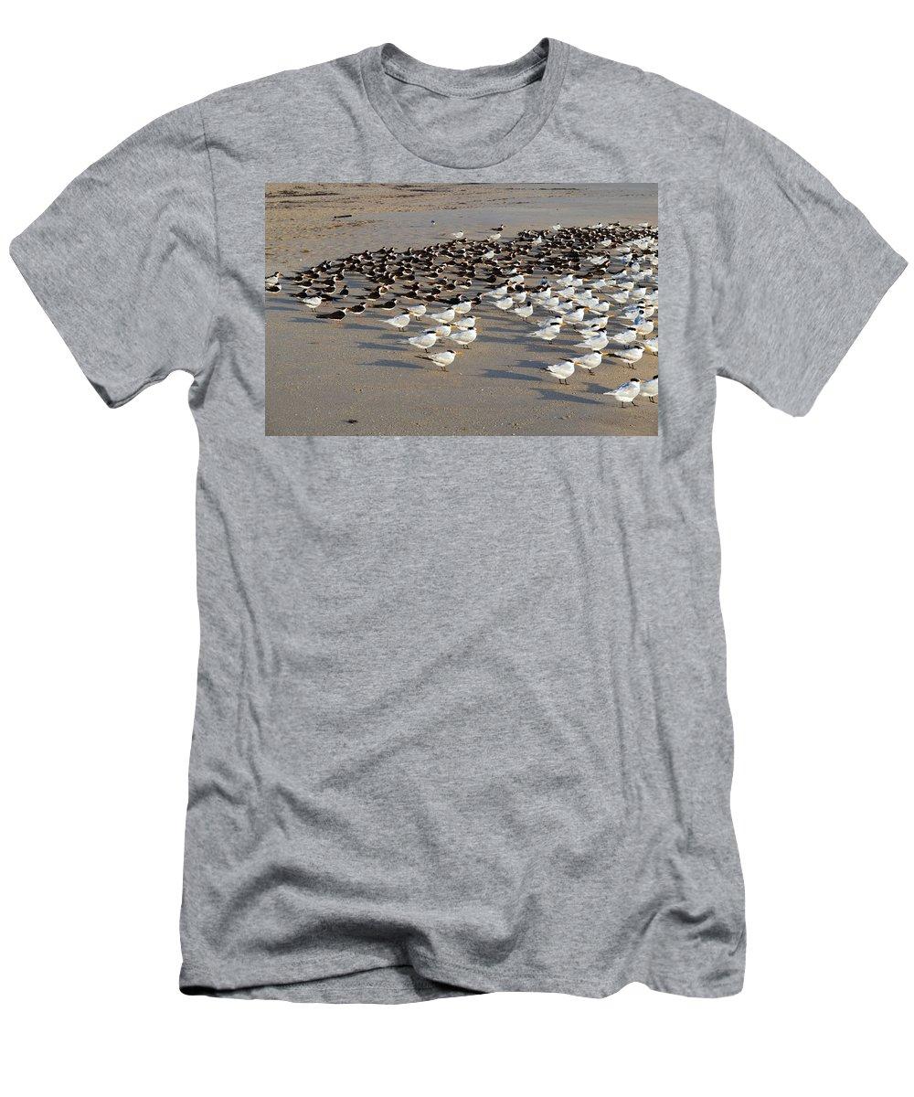 Florida; Bird; Gull; Tern; Royal; Beach; Shore; Coast; Sebastian; Inlet; Sea; Gull; Seagull; Sterna. Men's T-Shirt (Athletic Fit) featuring the photograph Royal Terns At Sebastian Inlet In Florida by Allan Hughes