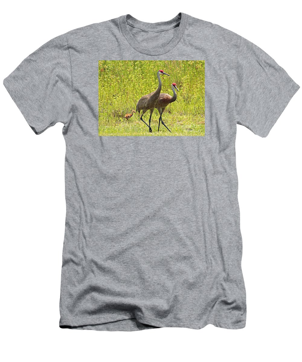 Sandhill Cranes Men's T-Shirt (Athletic Fit) featuring the photograph Sandhill Crane Family by Carol Groenen