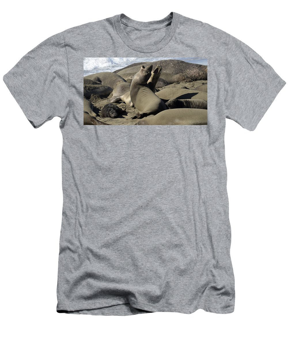 California Men's T-Shirt (Athletic Fit) featuring the photograph Seal Duet by Bob Christopher