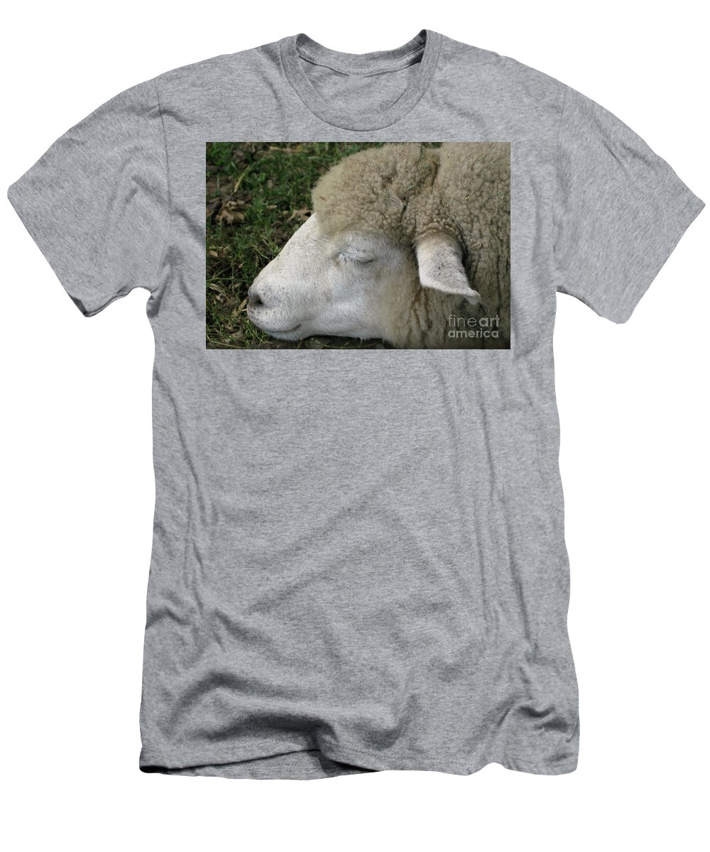 Sheep Men's T-Shirt (Athletic Fit) featuring the photograph Sheep Sleep by Ann Horn