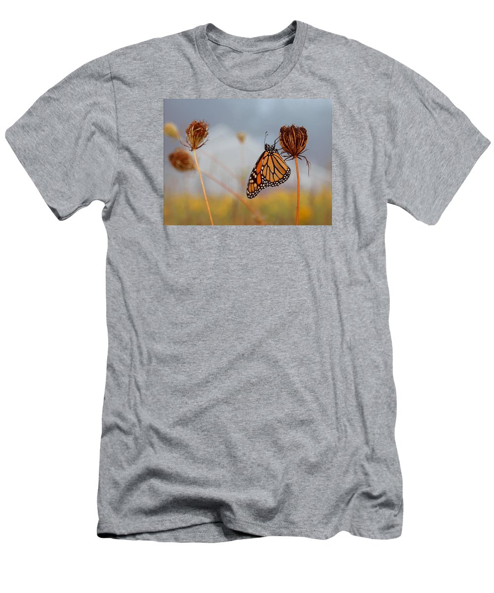Monarch Butterfly Men's T-Shirt (Athletic Fit) featuring the photograph Sleeping Beauty by Linda Murphy