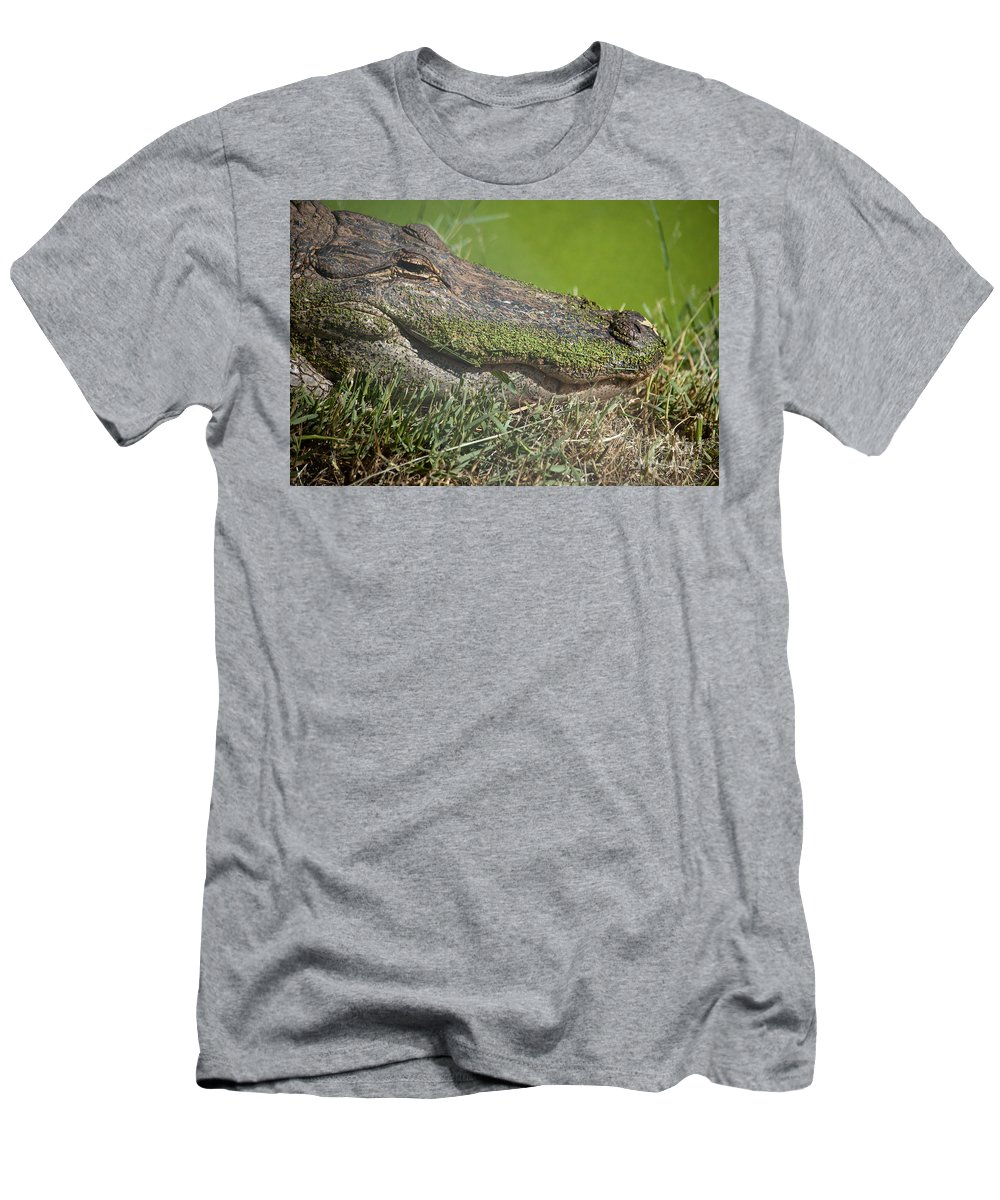 Alligator Men's T-Shirt (Athletic Fit) featuring the photograph Sleepy Papa Gator by Dora Hembree