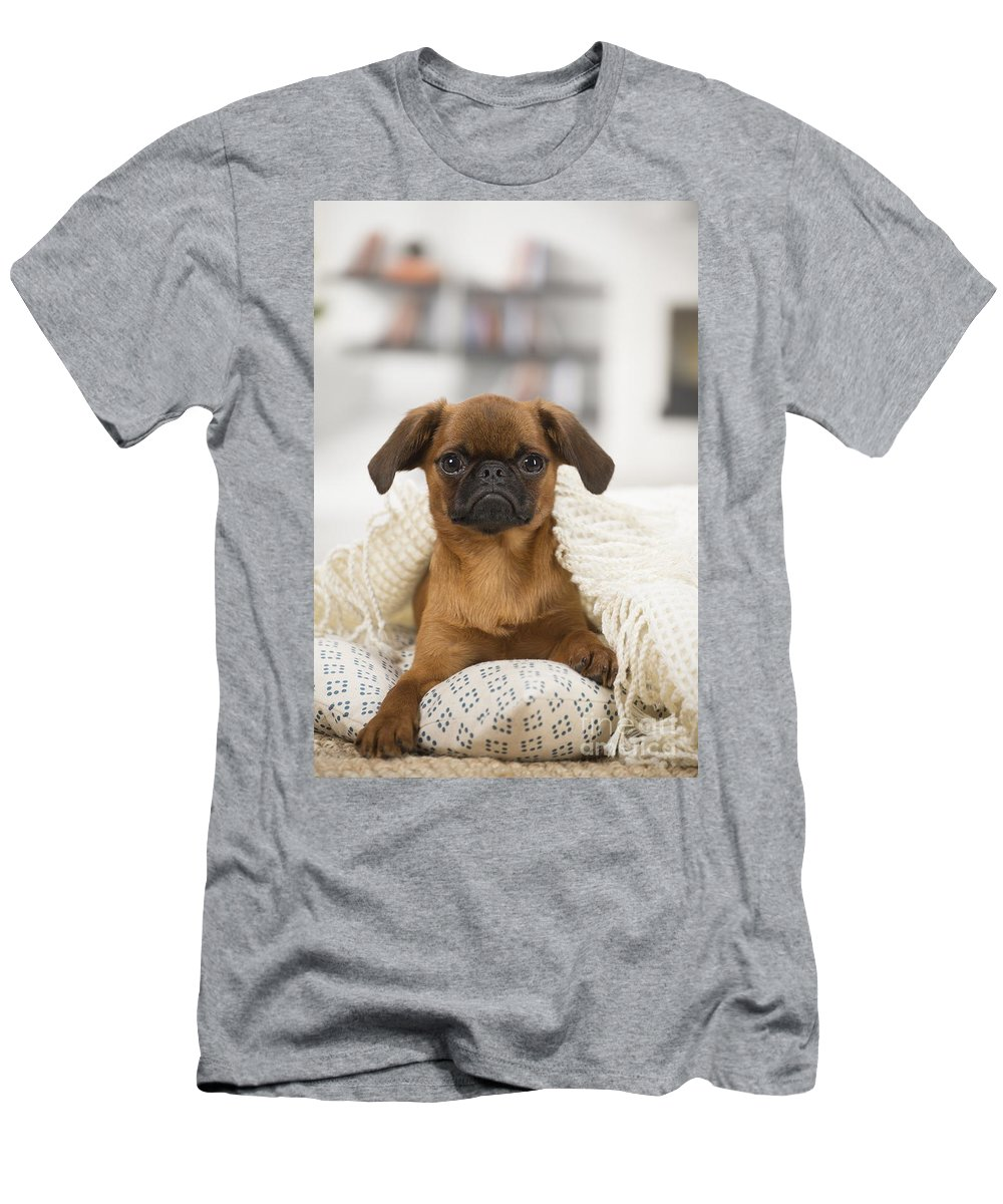 Animal Men's T-Shirt (Athletic Fit) featuring the photograph Small Brabant Griffon, Petit Brabancon, Dog by Mary Evans Picture Library