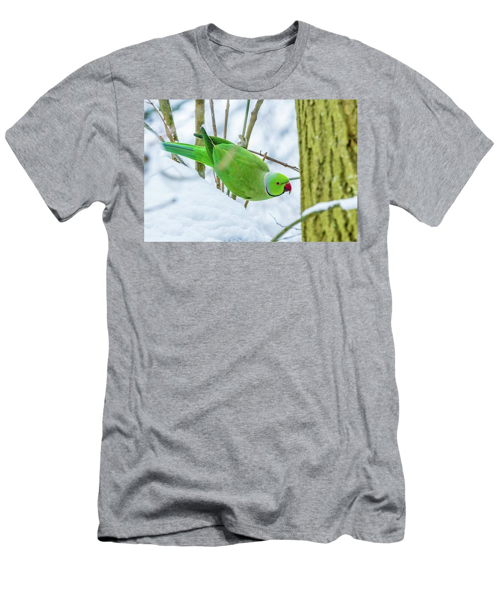 Africa Men's T-Shirt (Athletic Fit) featuring the photograph Snow Parrot by Andrew Balcombe