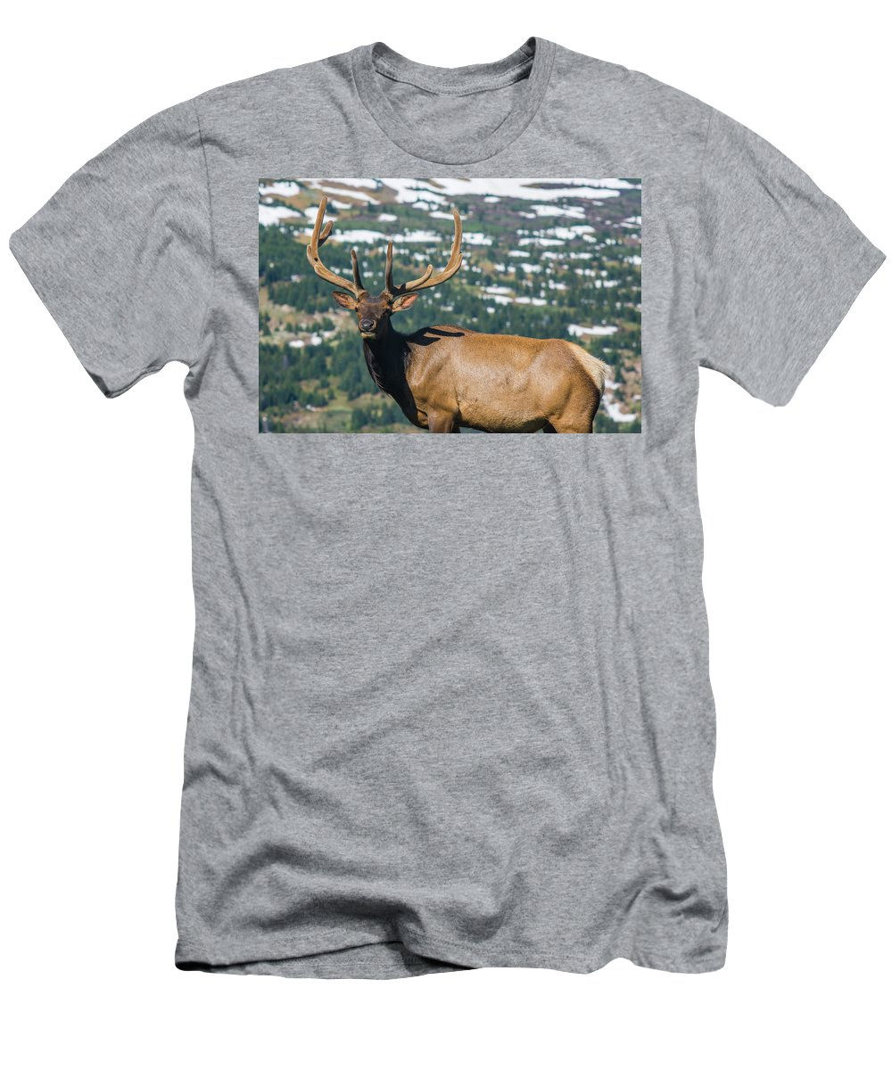 Animal Men's T-Shirt (Athletic Fit) featuring the photograph Spring Elk by Rob Lantz