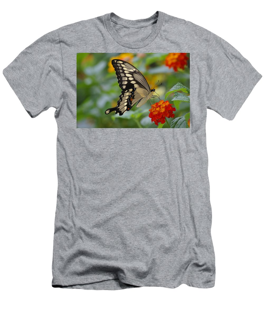Butterfly Men's T-Shirt (Athletic Fit) featuring the photograph Swallowtail On A Lantana by Jane Erhardt