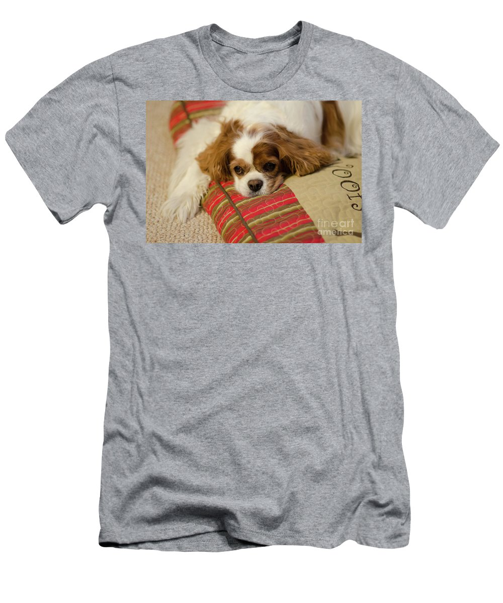 Daisy Men's T-Shirt (Athletic Fit) featuring the photograph Sweet Dog Face by Dale Powell