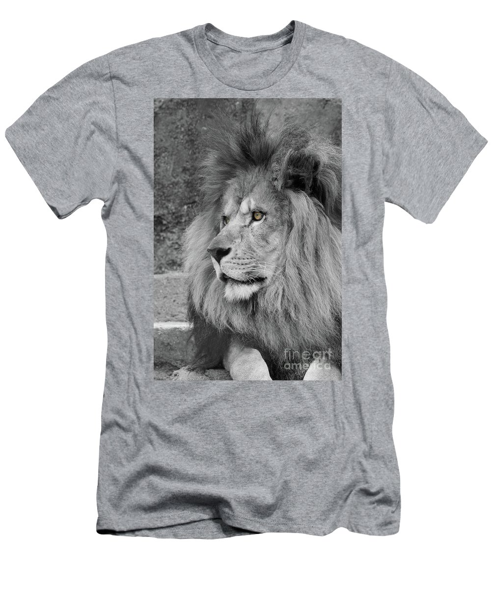 Lion Men's T-Shirt (Athletic Fit) featuring the photograph Tango #9 Black And White T O C by Judy Whitton