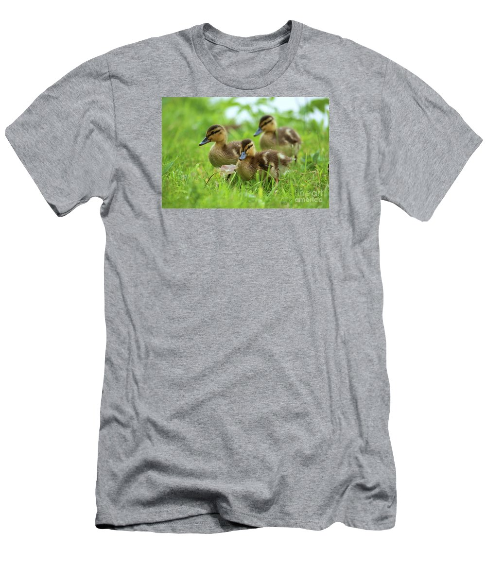 Bird Men's T-Shirt (Athletic Fit) featuring the photograph Three Wild Mallard Ducklings by Franco De Luca Calce Wildlife Photographer