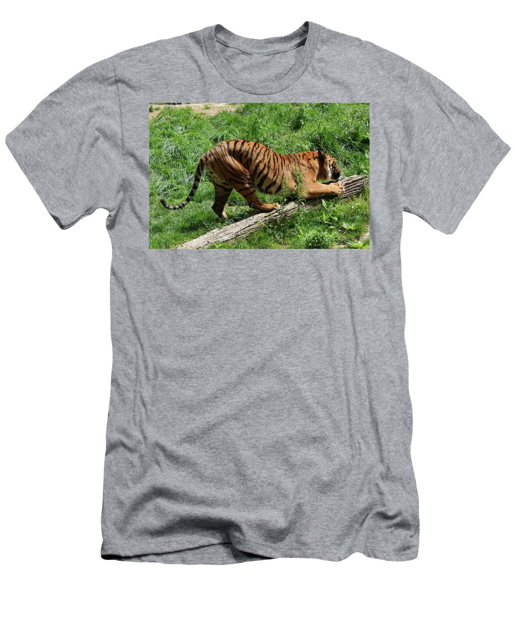 Memphis Zoo Men's T-Shirt (Athletic Fit) featuring the photograph Tiger Clawed by Terry Cobb