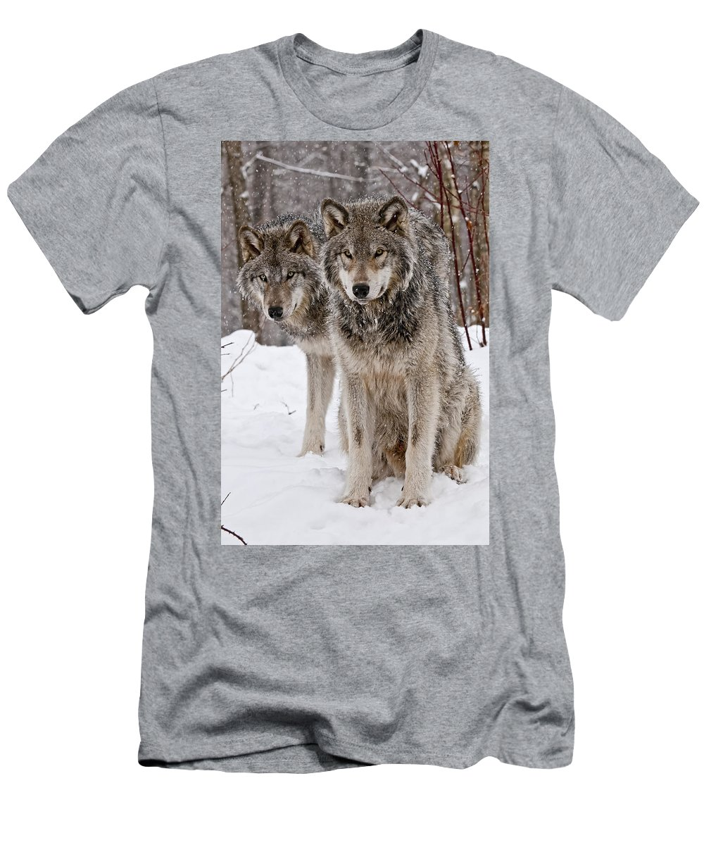 Michael Cummings Men's T-Shirt (Athletic Fit) featuring the photograph Timber Wolves In Winter by Michael Cummings