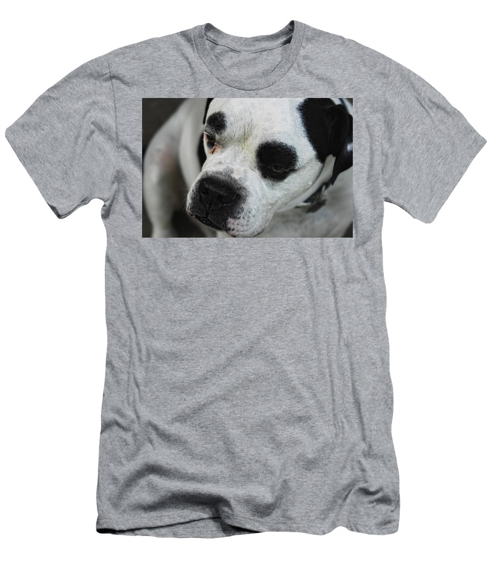 Bull Dog Men's T-Shirt (Athletic Fit) featuring the photograph Tough Guy by Donna Blackhall