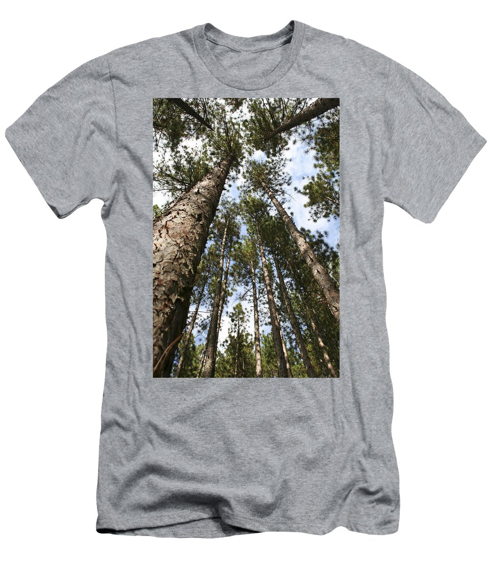 Autumn Men's T-Shirt (Athletic Fit) featuring the photograph Tree Stand by Margie Wildblood