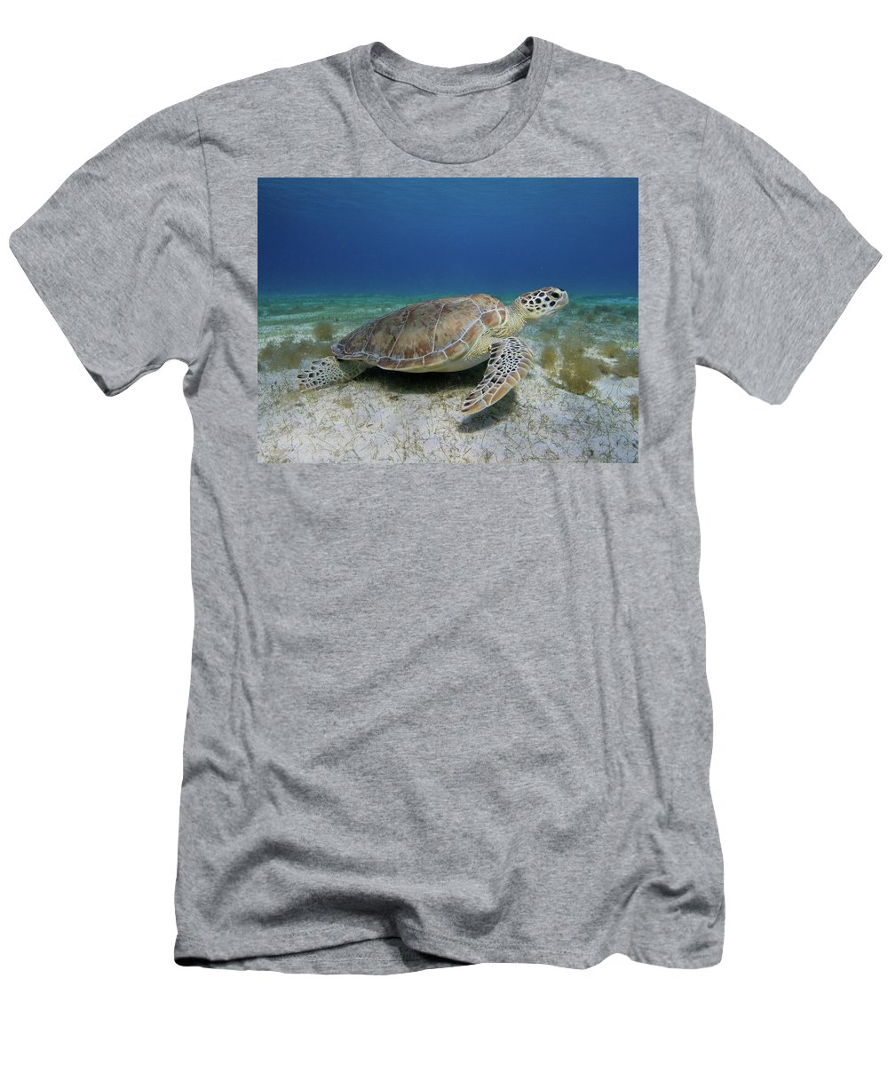 Turtle Men's T-Shirt (Athletic Fit) featuring the photograph Turtle Cove by Rob Lantz