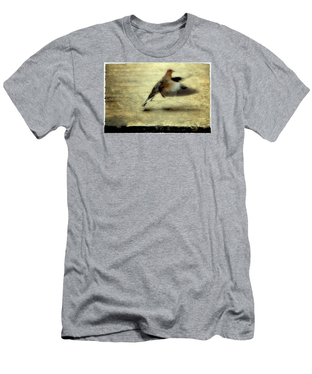 Jewish Men's T-Shirt (Athletic Fit) featuring the photograph Turtle Dove by Deb Cohen