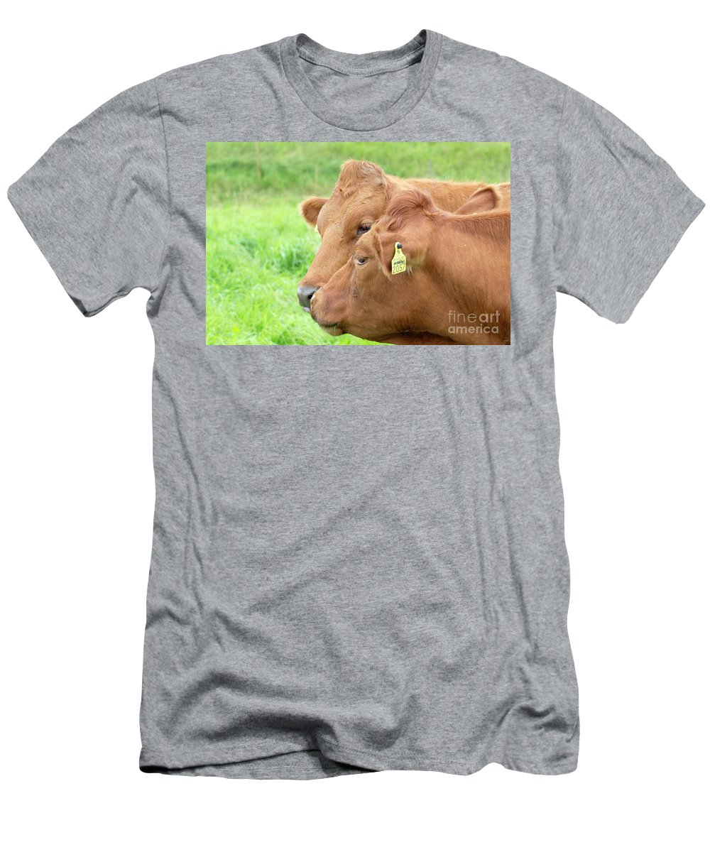 Cows Men's T-Shirt (Athletic Fit) featuring the photograph Two Cows by Esko Lindell