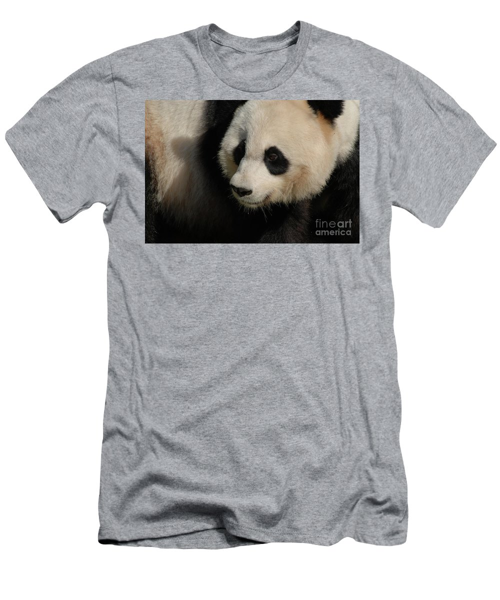 Panda Men's T-Shirt (Athletic Fit) featuring the photograph Very Fluffy Furry Face Of A Giant Panda by DejaVu Designs