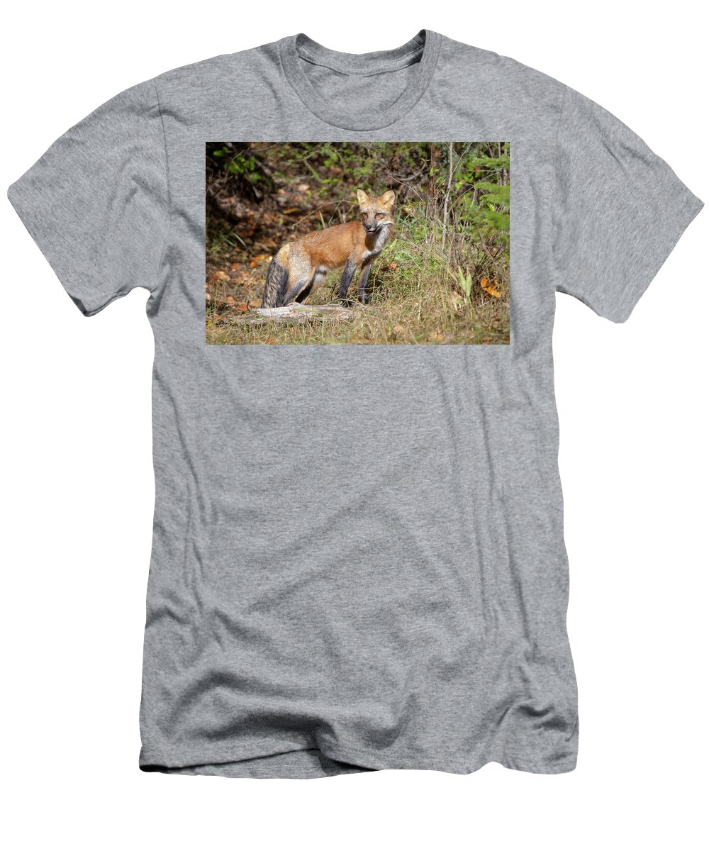 Fox Men's T-Shirt (Athletic Fit) featuring the photograph What Does The Fox Say by Jack Bell