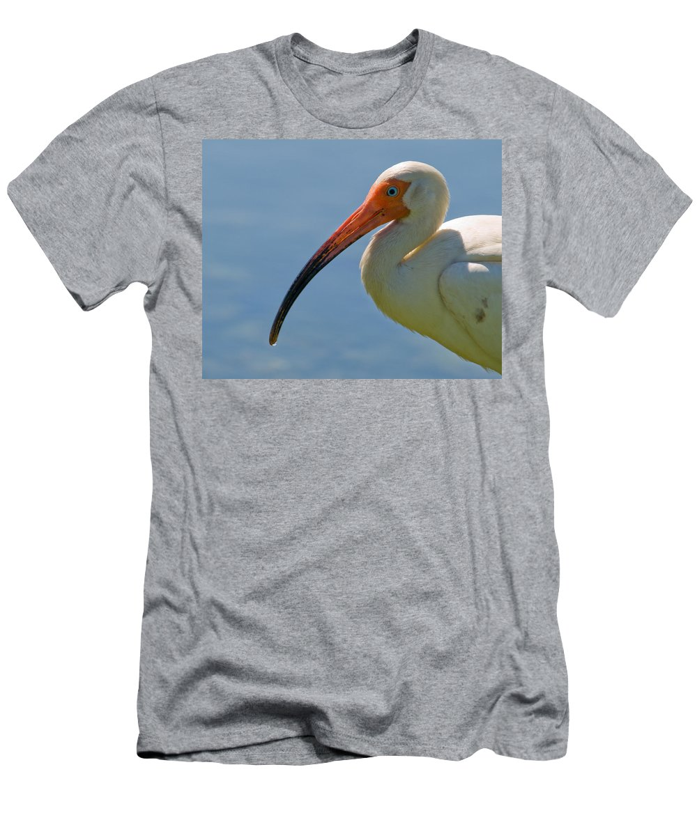 Ibis; White; Bird; Florida; Frog; Pollywogs; Pond; Seabird; Shore; Coast; Water; Fowl; Waterfowl; Fe Men's T-Shirt (Athletic Fit) featuring the photograph White Ibis by Allan Hughes