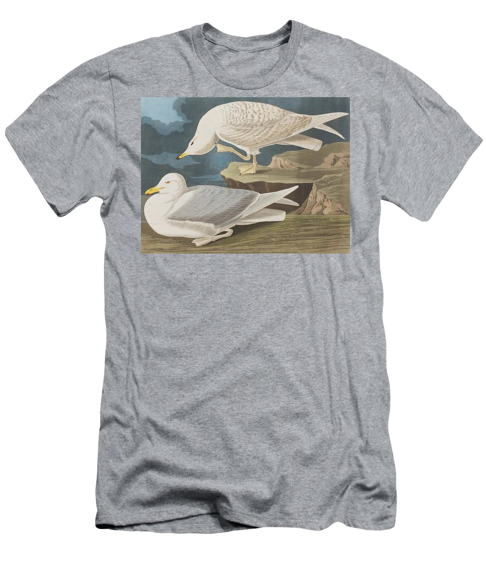 White Men's T-Shirt (Athletic Fit) featuring the painting White-winged Silvery Gull by John James Audubon