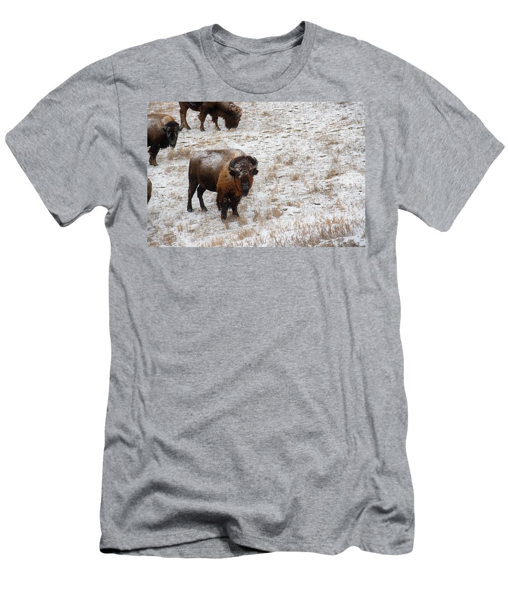 Buffalo Men's T-Shirt (Athletic Fit) featuring the photograph Winter Pasture by Derald Gross