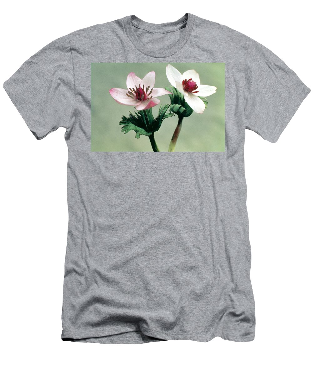 Flower Men's T-Shirt (Athletic Fit) featuring the photograph Wood Anemone by American School