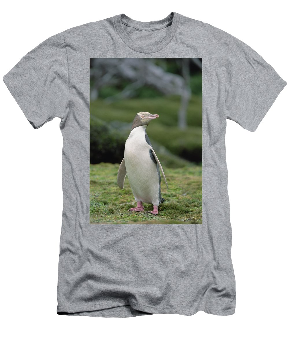 00193999 Men's T-Shirt (Athletic Fit) featuring the photograph Yellow-eyed Penguin Albino by Konrad Wothe