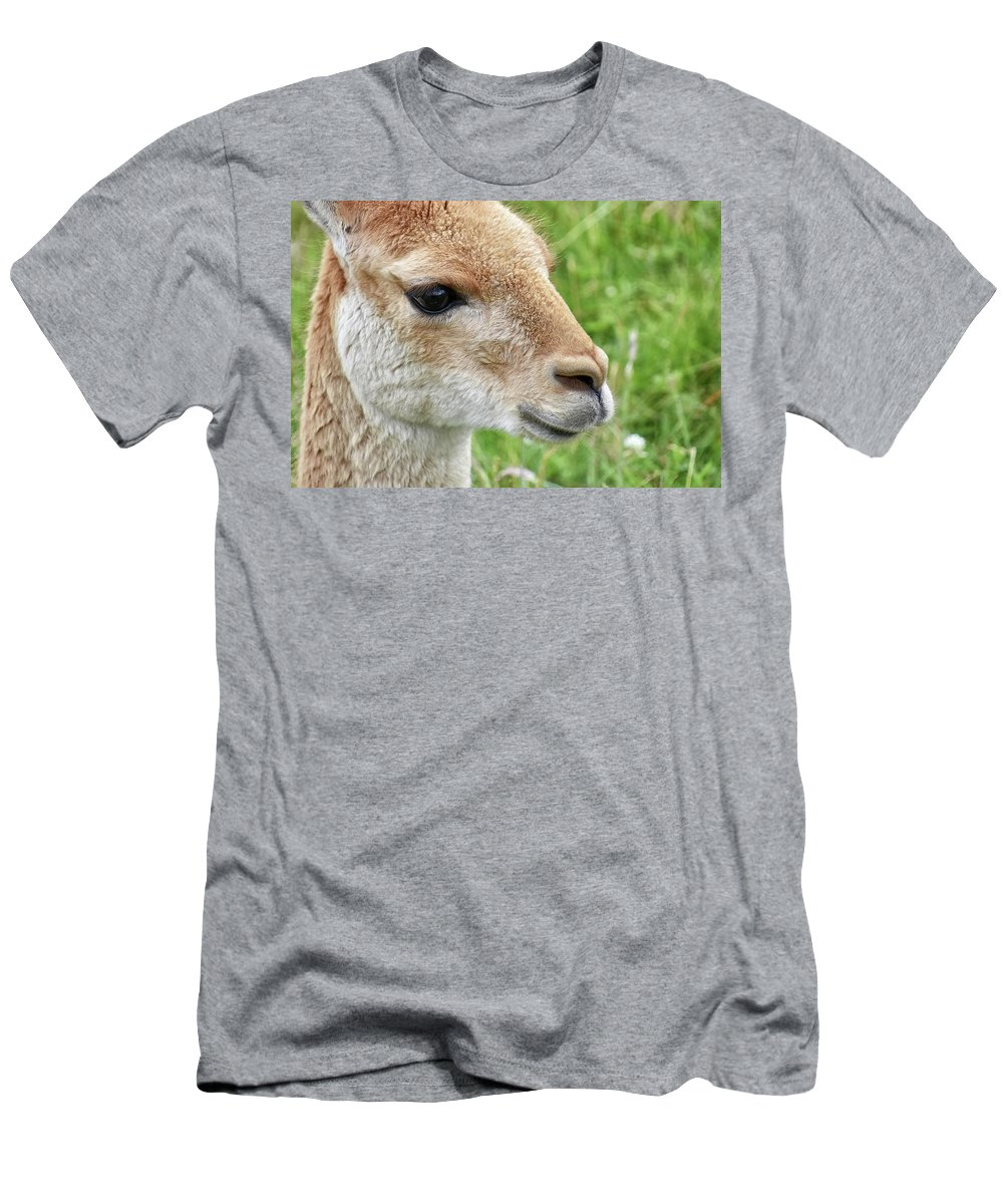 Vicuna Men's T-Shirt (Athletic Fit) featuring the photograph You Can Call Me Al by Kuni Photography