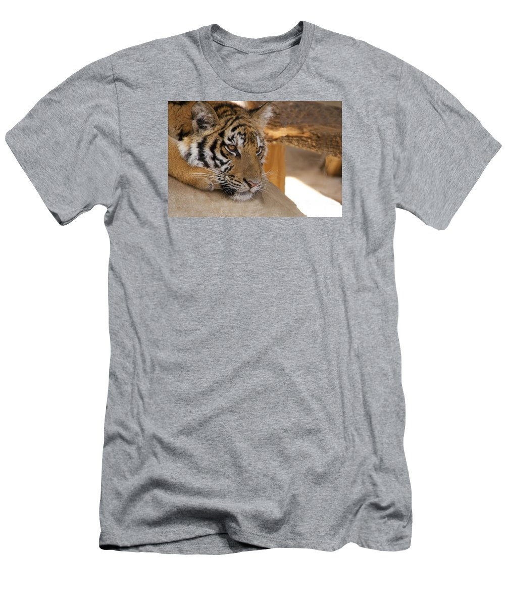 Tiger T-Shirt featuring the photograph Young Tiger by Toni Berry