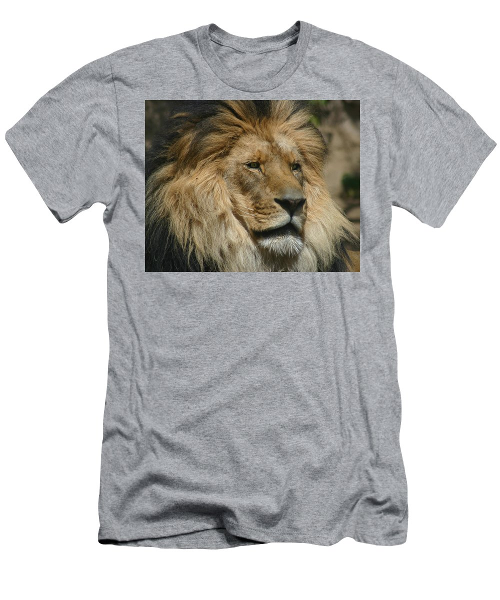 Lion Men's T-Shirt (Athletic Fit) featuring the photograph Your Majesty by Anthony Jones