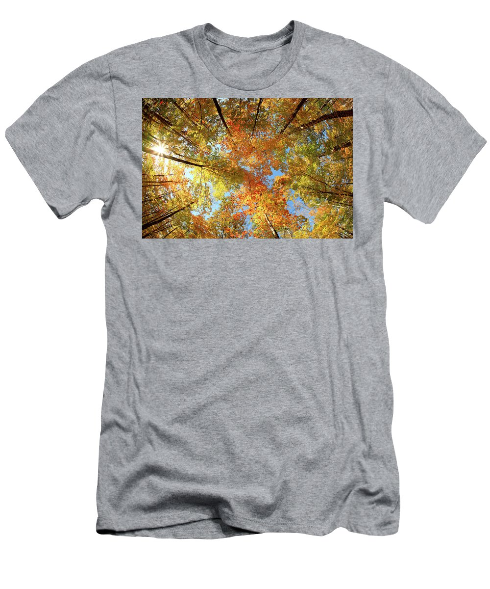 Canopy T-Shirt featuring the photograph Langlade County Canopy by Todd Klassy