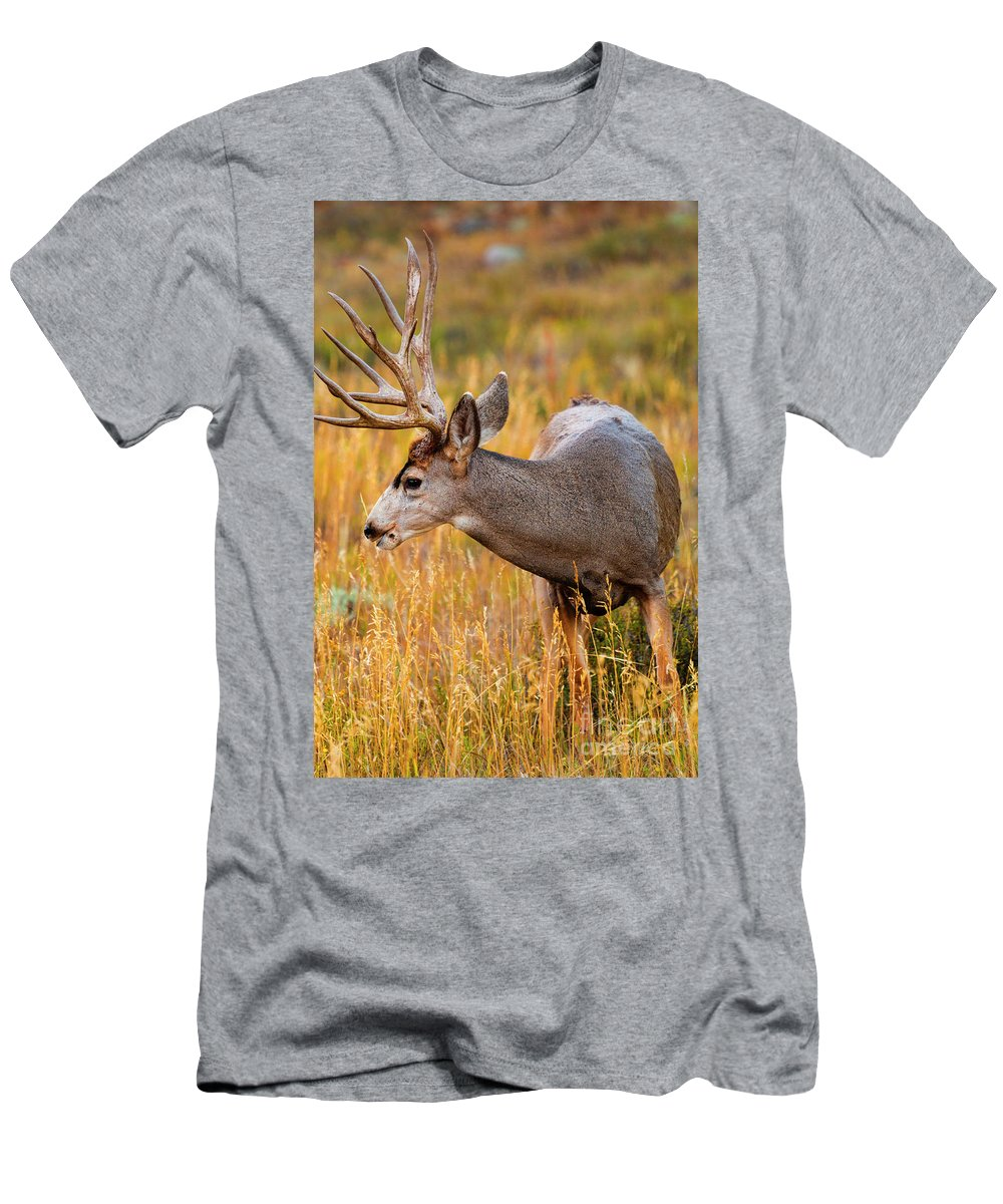 Mule Deer Men's T-Shirt (Athletic Fit) featuring the photograph Mule Deer Buck In Rocky Mountain National Park by Steve Krull
