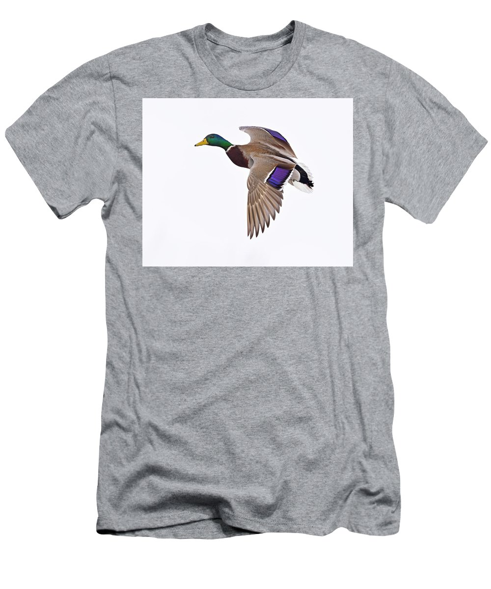Mallard Men's T-Shirt (Athletic Fit) featuring the photograph Need A Lift by Tony Beck