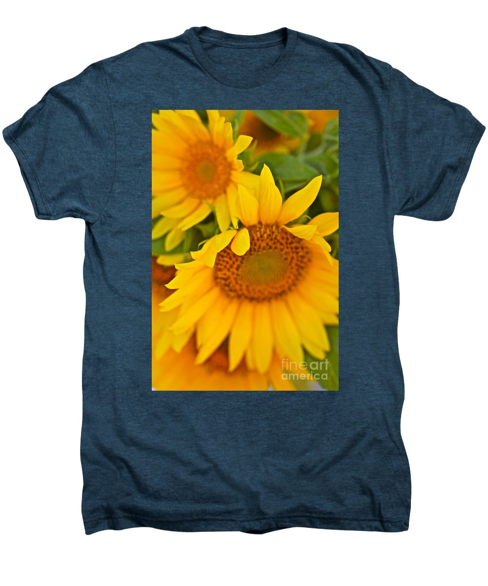 Yellow Men's Premium T-Shirt featuring the photograph Three Sunflowers by Nadine Rippelmeyer