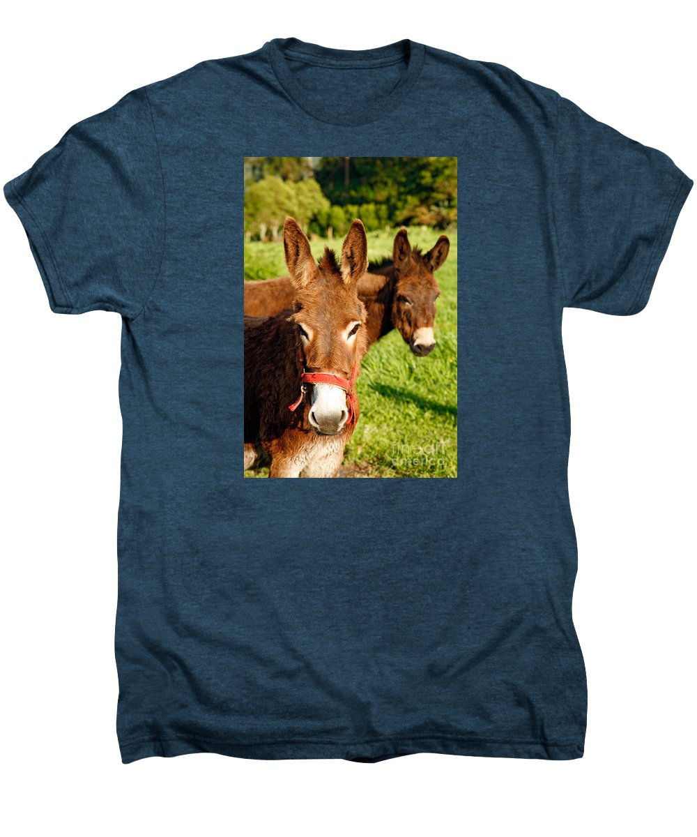 Animals Men's Premium T-Shirt featuring the photograph Two Donkeys by Gaspar Avila