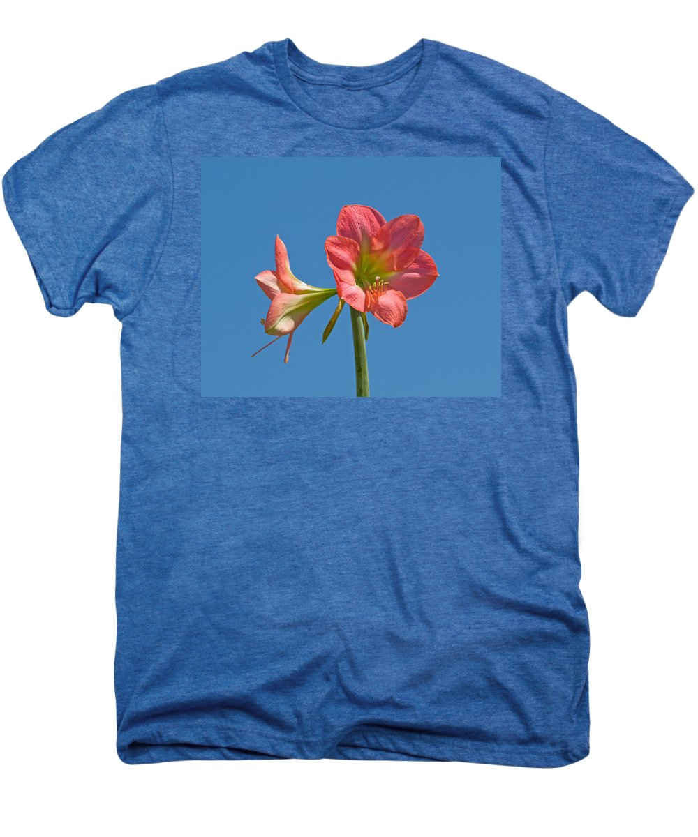 Hippeastrum; Amaryllidaceae; Belladonna; Lily; Amaryllis; Flower; Flowering; Plant; Bulb; Pot; Garde Men's Premium T-Shirt featuring the photograph Pink Amaryllis Flowering In Spring by Allan Hughes