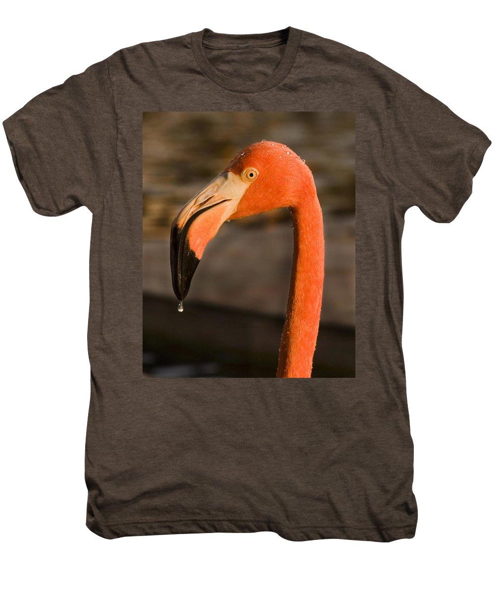 3scape Photos Men's Premium T-Shirt featuring the photograph Flamingo by Adam Romanowicz